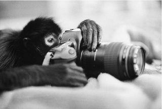 Of DSLRs and Monkeys