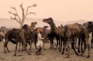 photography tour rajasthan photography tour pushkar camel fair